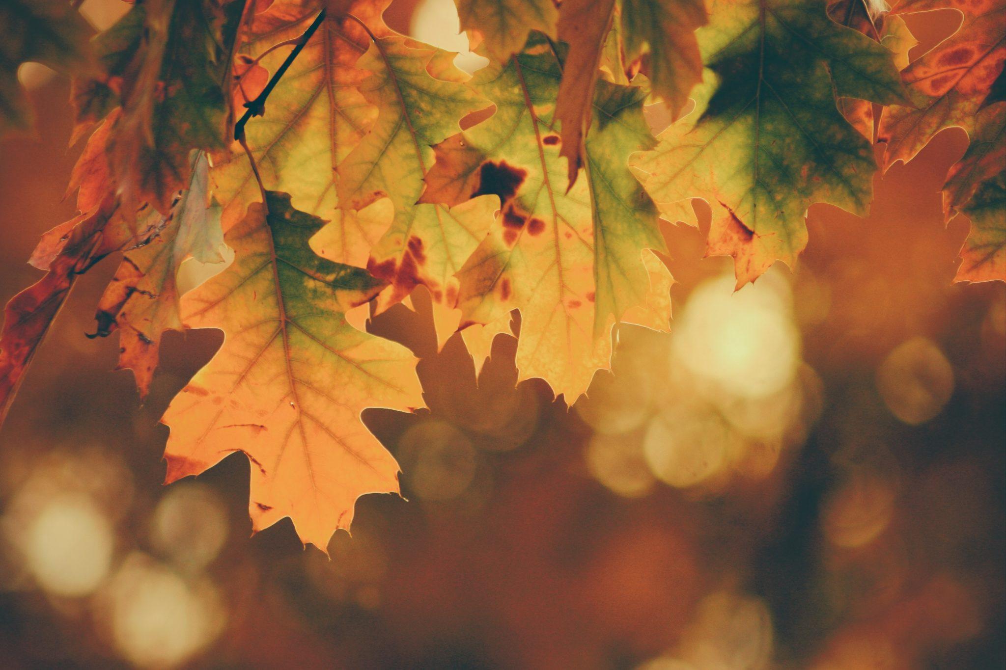 Höstens ankomst med friska tag